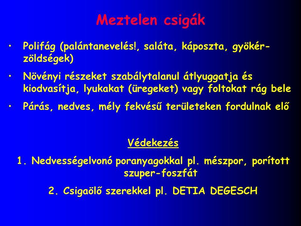 Meztelen csigák Polifág (palántanevelés!, saláta, káposzta, gyökér- zöldségek) Növényi részeket szabálytalanul átlyuggatja és kiodvasítja, lyukakat (ü