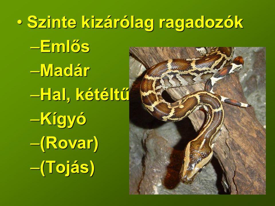 Szinte kizárólag ragadozókSzinte kizárólag ragadozók –Emlős –Madár –Hal, kétéltű –Kígyó –(Rovar) –(Tojás)