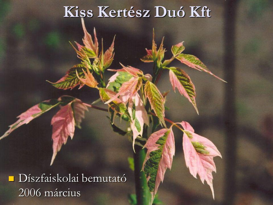 Kiss Kertész Duó Kft Díszfaiskolai bemutató 2006 március Díszfaiskolai bemutató 2006 március
