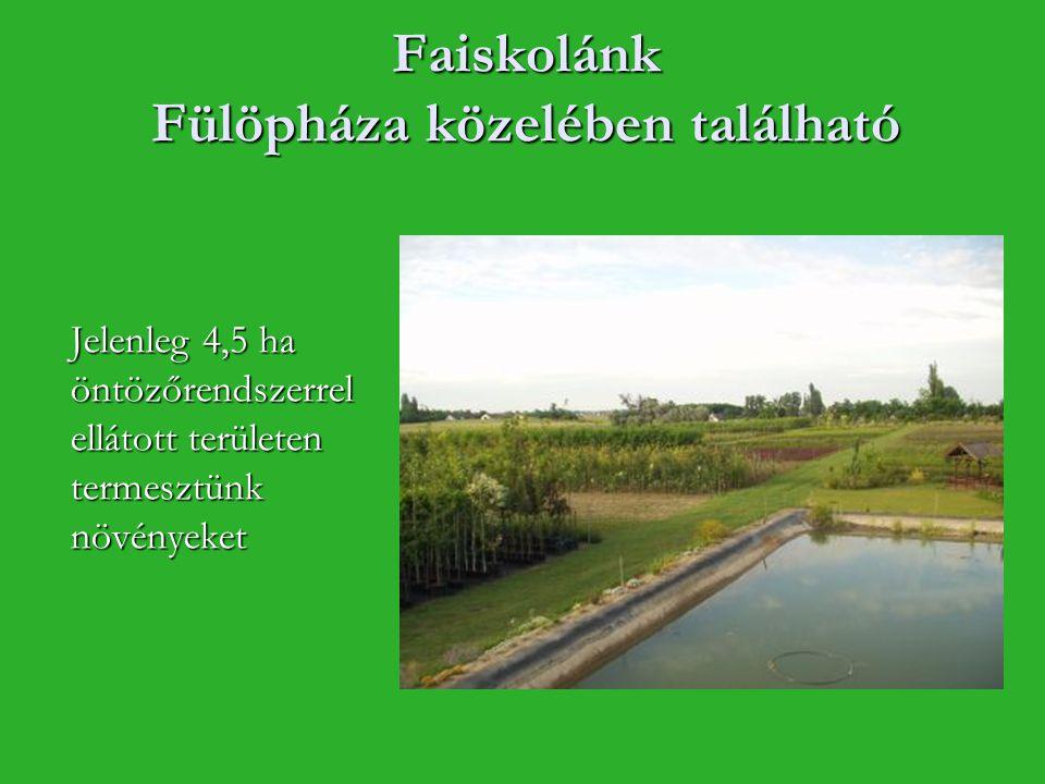 Faiskolánk Fülöpháza közelében található Jelenleg 4,5 ha öntözőrendszerrel ellátott területen termesztünk növényeket