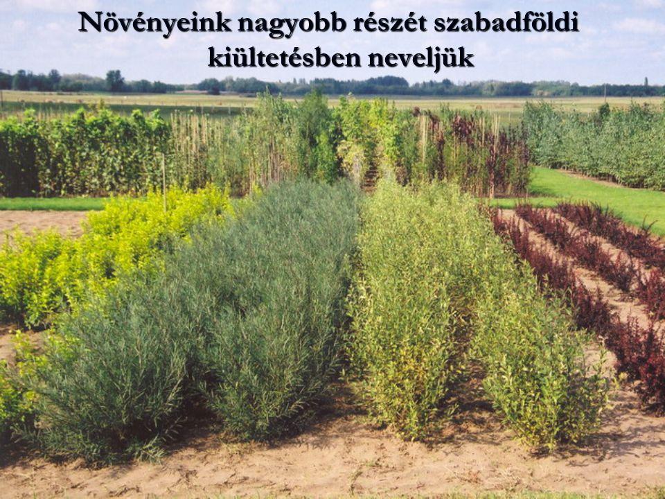 Növényeink nagyobb részét szabadföldi kiültetésben neveljük