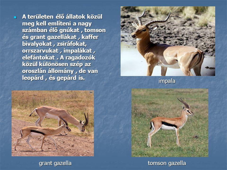 A területen élő állatok közül meg kell említeni a nagy számban élő gnúkat, tomson és grant gazellákat, kaffer bivalyokat, zsiráfokat, orrszarvukat, im
