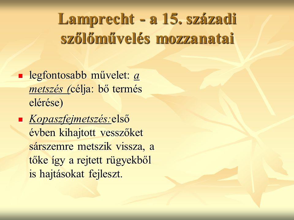 Lamprecht - a 15. századi szőlőművelés mozzanatai legfontosabb művelet: a metszés (célja: bő termés elérése) legfontosabb művelet: a metszés (célja: b