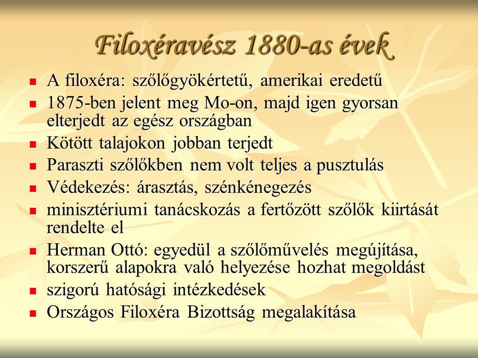 Filoxéravész 1880-as évek A filoxéra: szőlőgyökértetű, amerikai eredetű A filoxéra: szőlőgyökértetű, amerikai eredetű 1875-ben jelent meg Mo-on, majd