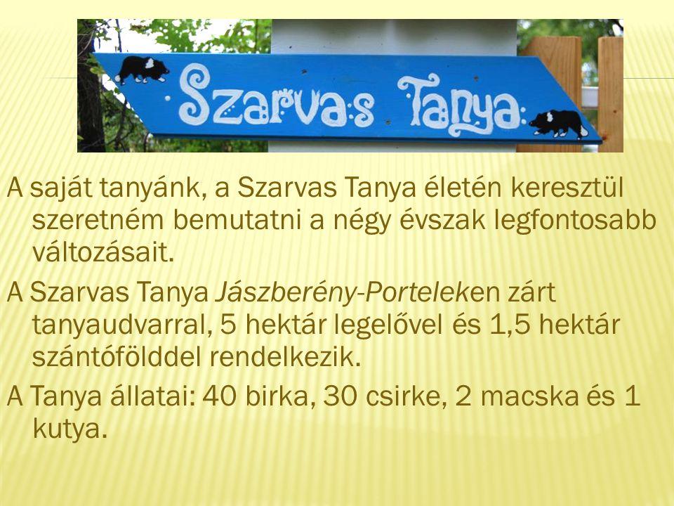 A saját tanyánk, a Szarvas Tanya életén keresztül szeretném bemutatni a négy évszak legfontosabb változásait. A Szarvas Tanya Jászberény-Porteleken zá