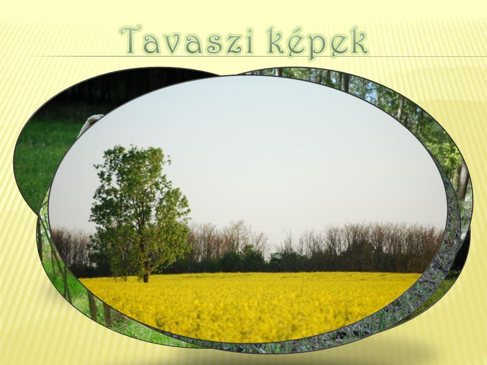 Megkezdődik a réten a fű kaszálása, majd bálázása, hogy télre szénaként kerülhes- sen a birkák elé.