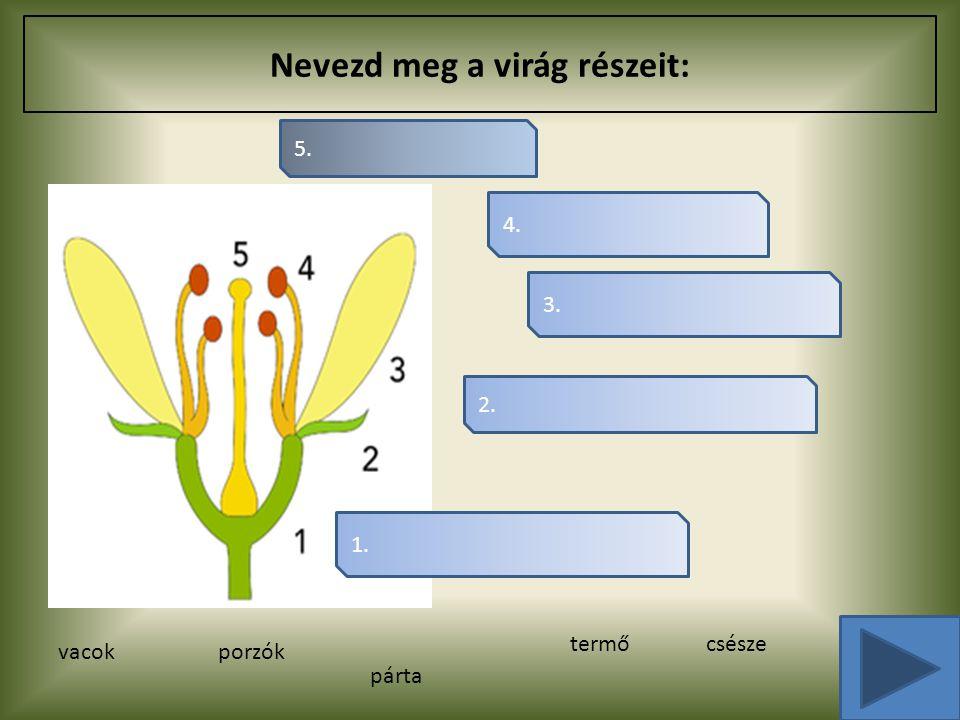 Nevezd meg a virág részeit: 4. 3. 2. 5. 1. vacokporzók párta termőcsésze