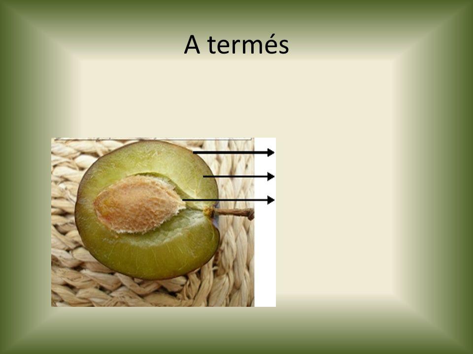 A termés