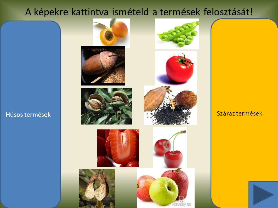 A képekre kattintva ismételd a termések felosztását! Húsos termések Száraz termések csonthéjas makktermés hüvely bogyótermés toktermés terméscsoport k