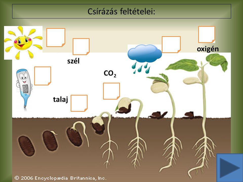 Csírázás feltételei: oxigén talaj CO 2 szél