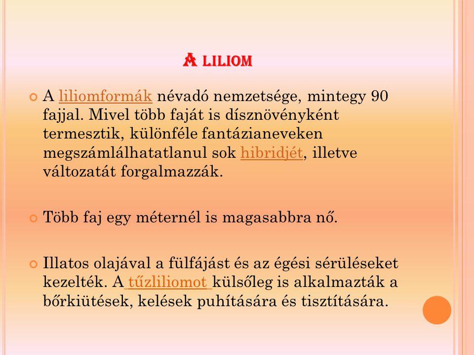 A LILIOM A liliomformák névadó nemzetsége, mintegy 90 fajjal. Mivel több faját is dísznövényként termesztik, különféle fantázianeveken megszámlálhatat