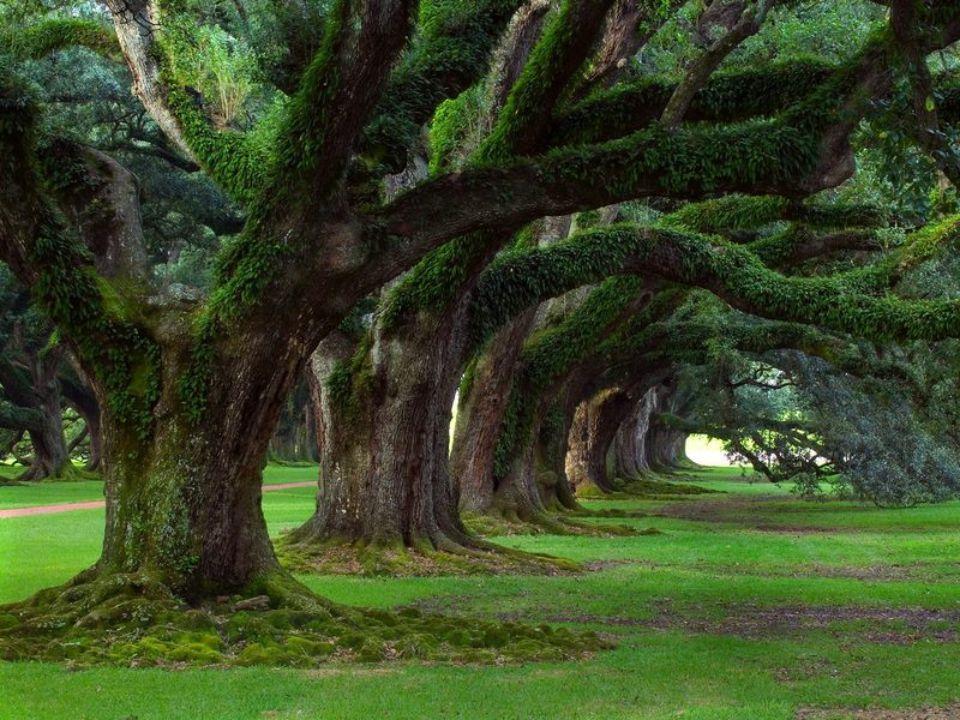 """""""Menj bátran, minél mélyebbre az erd ő k közé. A fák alatt itt-ott még látod majd a harmatot, ahogy megcsillan a f ű szálak hegyén. Jusson eszedbe, ho"""