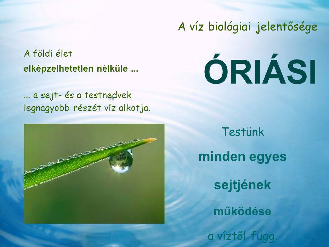 A víz biológiai jelentősége ÓRIÁSI A földi élet elképzelhetetlen nélküle...... a sejt- és a testnedvek legnagyobb részét víz alkotja. Testünk minden e