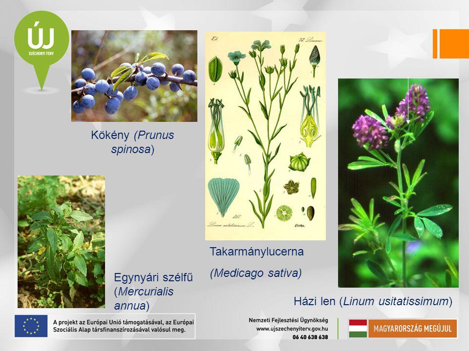 Kökény (Prunus spinosa) Egynyári szélfű (Mercurialis annua) Takarmánylucerna (Medicago sativa) Házi len (Linum usitatissimum)