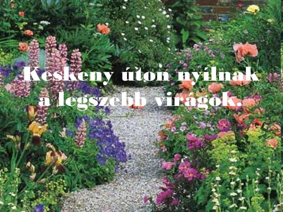 Keskeny úton nyílnak a legszebb virágok.