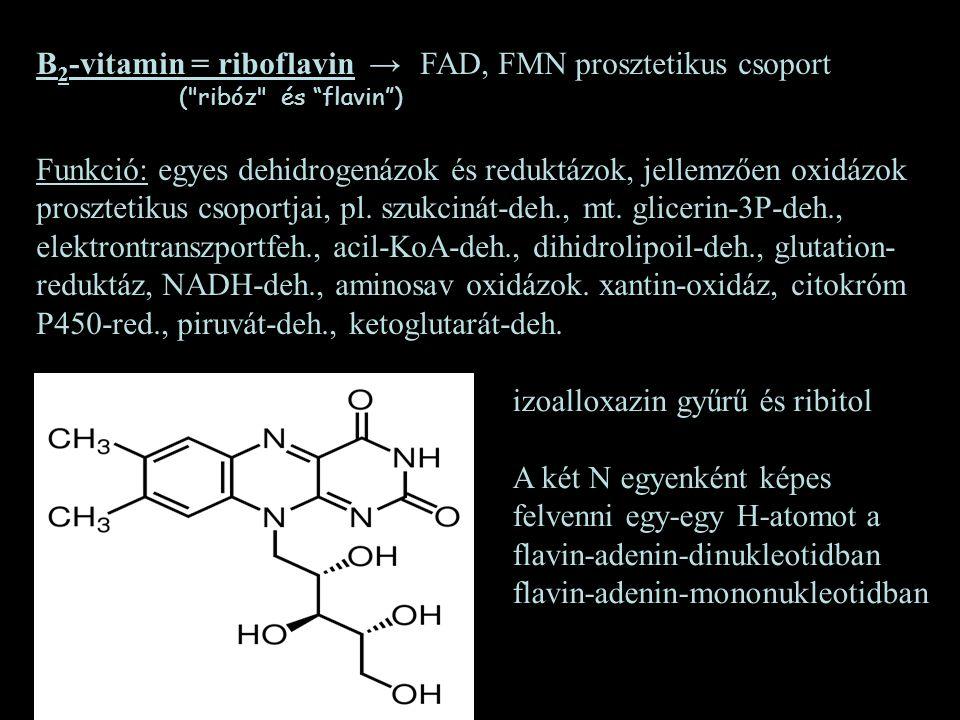 B 2 -vitamin = riboflavin →FAD, FMN prosztetikus csoport (