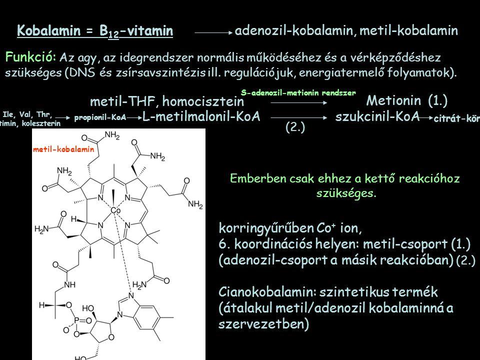 Kobalamin = B 12 -vitamin adenozil-kobalamin, metil-kobalamin metil-THF, homocisztein Metionin (1.) L-metilmalonil-KoAszukcinil-KoA metil-kobalamin ko