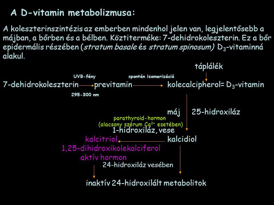 A D-vitamin metabolizmusa: táplálék UVB-fény spontán izomerizáció 7-dehidrokoleszterin previtamin kolecalcipherol= D 3 -vitamin 295-300 nm máj 25-hidr