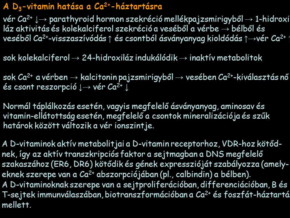 A D 3 -vitamin hatása a Ca 2+ -háztartásra vér Ca 2+ ↓→ parathyroid hormon szekréció mellékpajzsmirigyből → 1-hidroxi- láz aktivitás és kolekalciferol