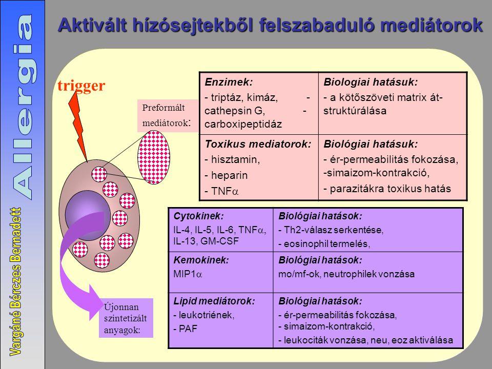 trigger Aktivált hízósejtekből felszabaduló mediátorok Enzimek: - triptáz, kimáz, - cathepsin G, - carboxipeptidáz Biologiai hatásuk: - a kötőszöveti matrix át- struktúrálása Toxikus mediatorok: - hisztamin, - heparin - TNF  Biológiai hatásuk: - ér-permeabilitás fokozása, -simaizom-kontrakció, - parazitákra toxikus hatás Cytokinek: IL-4, IL-5, IL-6, TNF  IL-13, GM-CSF Biológiai hatások: - Th2-válasz serkentése, - eosinophil termelés, Kemokinek: MIP1  Biológiai hatások: mo/mf-ok, neutrophilek vonzása Lipid mediátorok: - leukotriének, - PAF Biológiai hatások: - ér-permeabilitás fokozása, - simaizom-kontrakció, - leukociták vonzása, neu, eoz aktiválása Preformált mediátorok : Újonnan szintetizált anyagok: