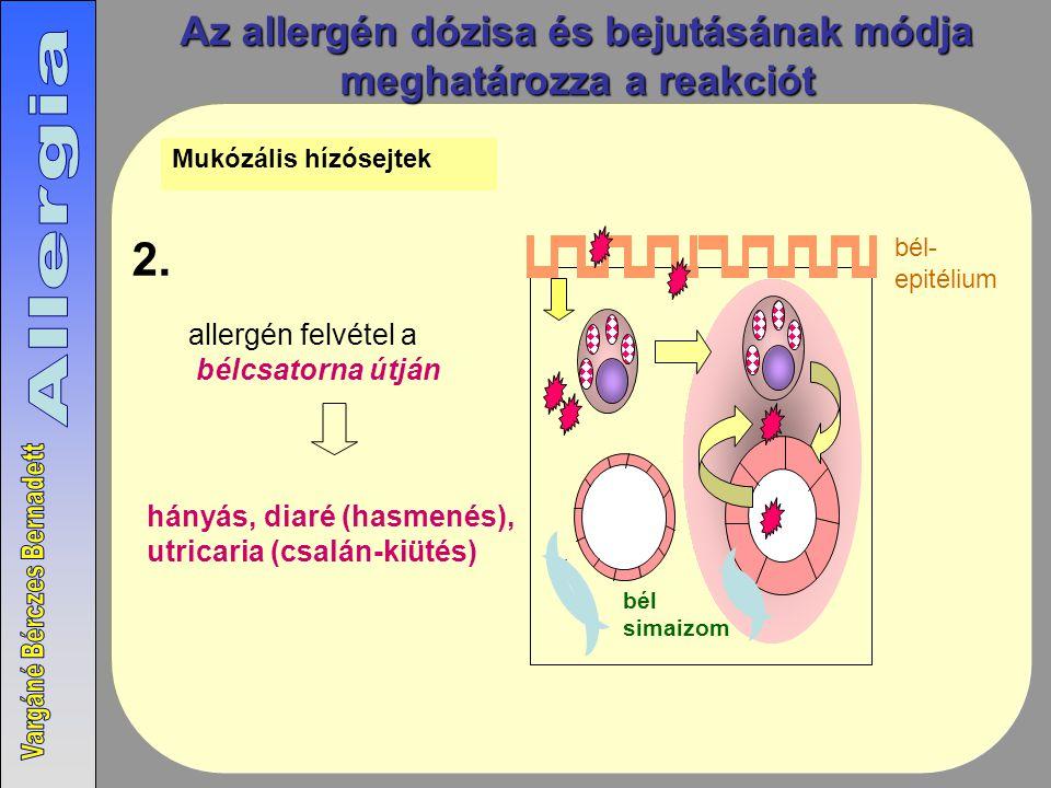 Az allergén dózisa és bejutásának módja meghatározza a reakciót allergén felvétel a bélcsatorna útján hányás, diaré (hasmenés), utricaria (csalán-kiütés) 2.