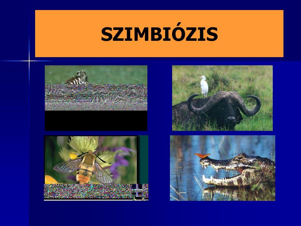SZIMBIÓZIS