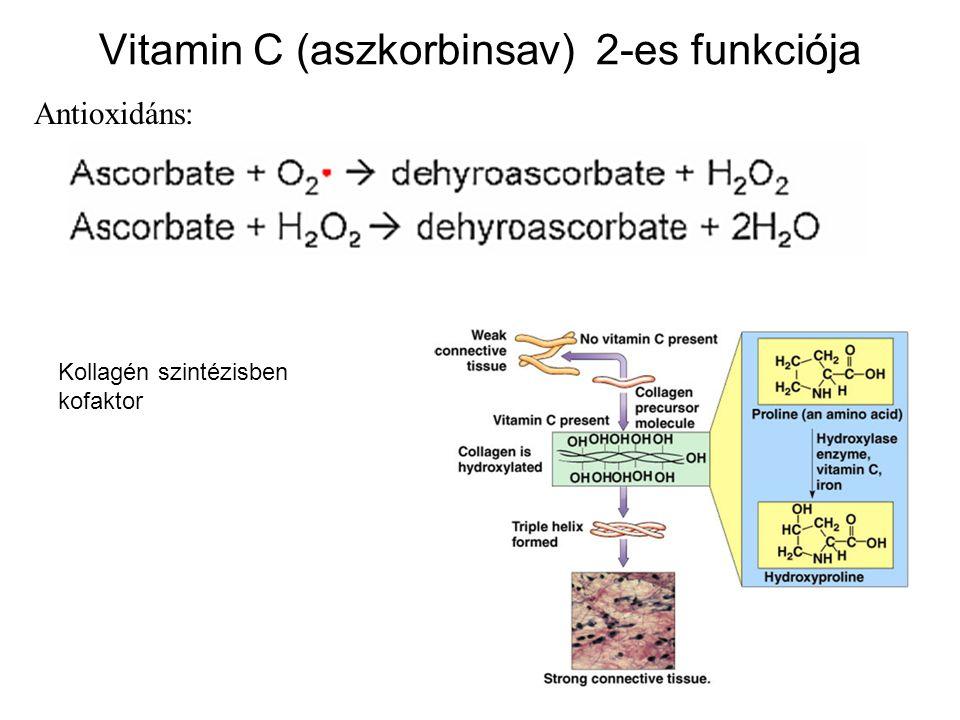 27 Vitamin C (aszkorbinsav) 2-es funkciója Antioxidáns: Kollagén szintézisben kofaktor