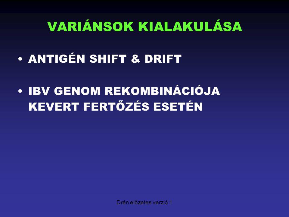 Drén előzetes verzió 1 VARIÁNSOK KIALAKULÁSA ANTIGÉN SHIFT & DRIFT IBV GENOM REKOMBINÁCIÓJA KEVERT FERTŐZÉS ESETÉN