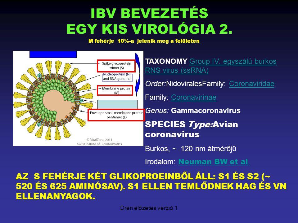 Drén előzetes verzió 1 VIRUS REPLIKÁCIÓ ADSZORPCIÓ (SEJTECEPTOR S1 KAPCSOLAT) PENETRÁCIÓ/MEMBRÁN FÚZIÓ SZERKEZETI ( S1-S2, M, E, N) ÉS KISEGITŐ FEHÉRJÉKET KÓDOLÓ RNS SZINTÉZIS (REKOMBINÁCIÓS LEHETŐSÉG, VIRULENCIA ?) VIRIONOK KIALAKULÁSA ENDOPLAZMÁS RETIKULUMBAN BIMBÓZÁS ÉS FELHALMOZÓDÁS (??) UTÓDVIRUSOK ~ 3-4 ÓRA UTÁN (MAX.
