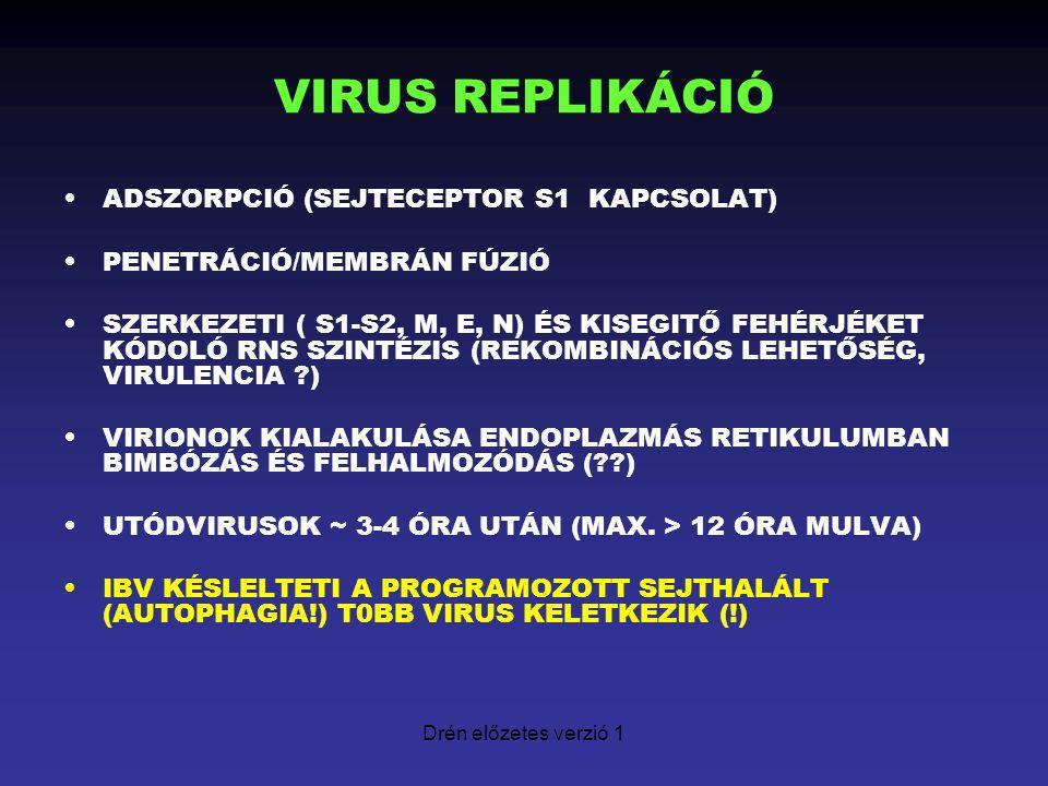 Drén előzetes verzió 1 VIRUS REPLIKÁCIÓ ADSZORPCIÓ (SEJTECEPTOR S1 KAPCSOLAT) PENETRÁCIÓ/MEMBRÁN FÚZIÓ SZERKEZETI ( S1-S2, M, E, N) ÉS KISEGITŐ FEHÉRJ