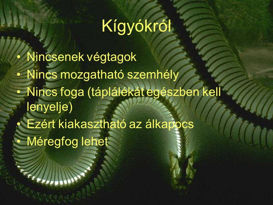 Kígyókról Nincsenek végtagok Nincs mozgatható szemhély Nincs foga (táplálékát egészben kell lenyelje) Ezért kiakasztható az álkapocs Méregfog lehet