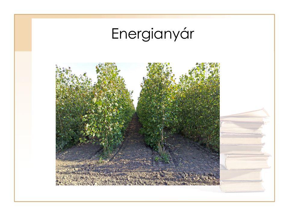 Biomassza energetikai hasznosítása Termikus hasznosítás –Tüzelés –Pirolízis Biogáz előállítása