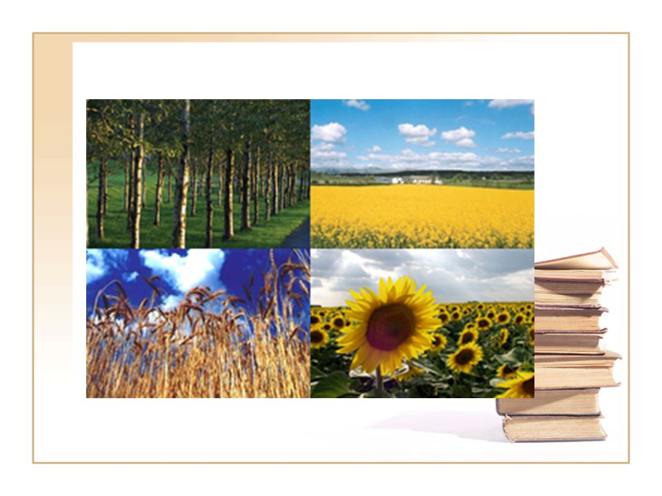 Biomasszák csoportosítása Primer (lignocellulózok): Fotoszintézissel létrejövő anyagok (növények, fa) és azok hasznosításának melléktermékei (szalma) Szekunder (állati biomassza és termék): Primer biomasszák és élőszervezetek közreműködésével létrejövő szerves anyagok, állati zsírok, termékek (tej, tojás), hús(fehérjék) stb.