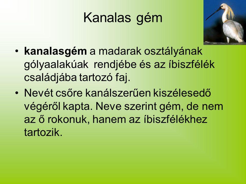 Kanalas gém kanalasgém a madarak osztályának gólyaalakúak rendjébe és az íbiszfélék családjába tartozó faj. Nevét csőre kanálszerűen kiszélesedő végér