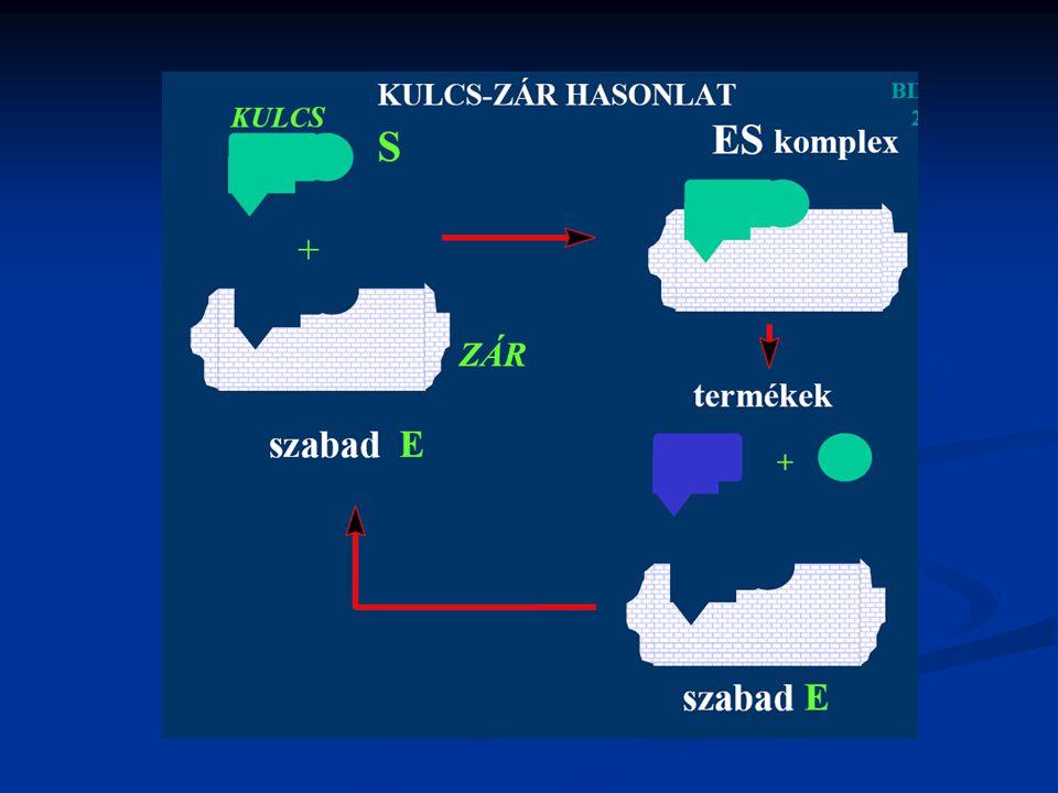 Az enzimek is lehetnek antioxidánsok Enzimatikus antioxidánsok: Szuperoxid-dizmutázok Szuperoxid-dizmutázok Kataláz Kataláz Peroxidázok Peroxidázok Nem enzimatikus antioxidánsok: Vitaminok( A, D, E, K) Flavonoidok, flavonok Polifenolos vegyületek Szelén