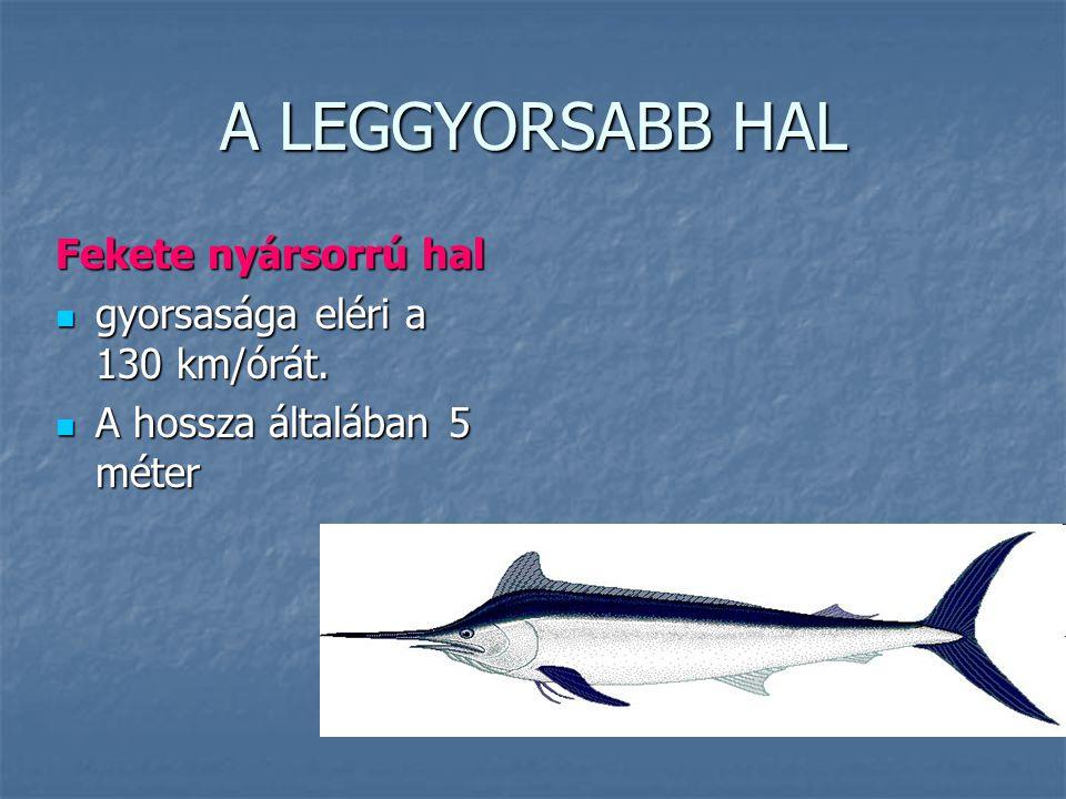 A LEGGYORSABB HAL Fekete nyársorrú hal gyorsasága eléri a 130 km/órát. gyorsasága eléri a 130 km/órát. A hossza általában 5 méter A hossza általában 5