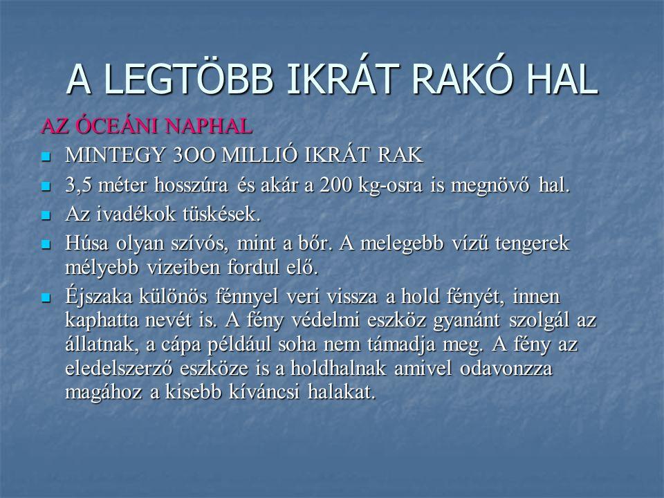 A LEGTÖBB IKRÁT RAKÓ HAL AZ ÓCEÁNI NAPHAL MINTEGY 3OO MILLIÓ IKRÁT RAK MINTEGY 3OO MILLIÓ IKRÁT RAK 3,5 méter hosszúra és akár a 200 kg-osra is megnöv