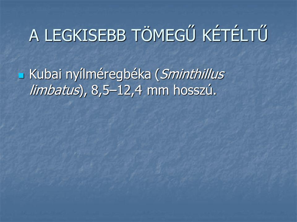 A LEGKISEBB TÖMEGŰ KÉTÉLTŰ Kubai nyílméregbéka (Sminthillus limbatus), 8,5–12,4 mm hosszú. Kubai nyílméregbéka (Sminthillus limbatus), 8,5–12,4 mm hos
