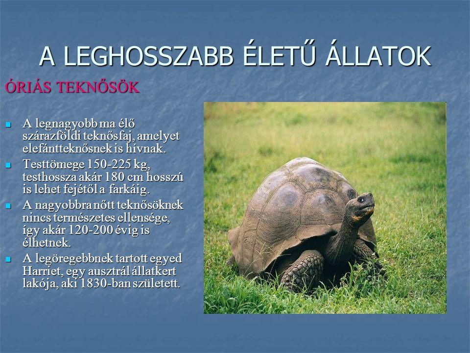 A LEGHOSSZABB ÉLETŰ ÁLLATOK ÓRIÁS TEKNŐSÖK A legnagyobb ma élő szárazföldi teknősfaj, amelyet elefántteknősnek is hívnak. A legnagyobb ma élő szárazfö