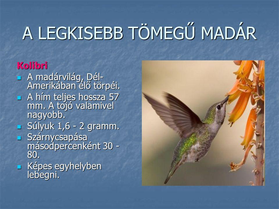 A LEGKISEBB TÖMEGŰ MADÁR Kolibri A madárvilág, Dél- Amerikában élő törpéi. A madárvilág, Dél- Amerikában élő törpéi. A hím teljes hossza 57 mm. A tojó