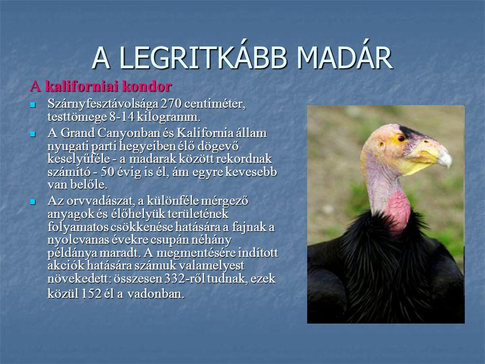 A LEGRITKÁBB MADÁR A kaliforniai kondor Szárnyfesztávolsága 270 centiméter, testtömege 8-14 kilogramm. Szárnyfesztávolsága 270 centiméter, testtömege