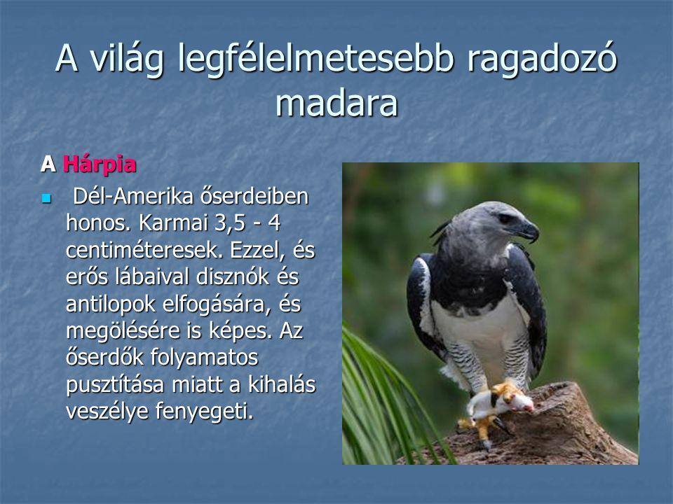 A világ legfélelmetesebb ragadozó madara A Hárpia Dél-Amerika őserdeiben honos. Karmai 3,5 - 4 centiméteresek. Ezzel, és erős lábaival disznók és anti