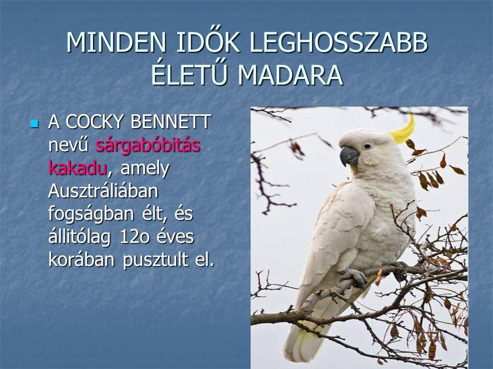 MINDEN IDŐK LEGHOSSZABB ÉLETŰ MADARA A COCKY BENNETT nevű sárgabóbitás kakadu, amely Ausztráliában fogságban élt, és állitólag 12o éves korában pusztu