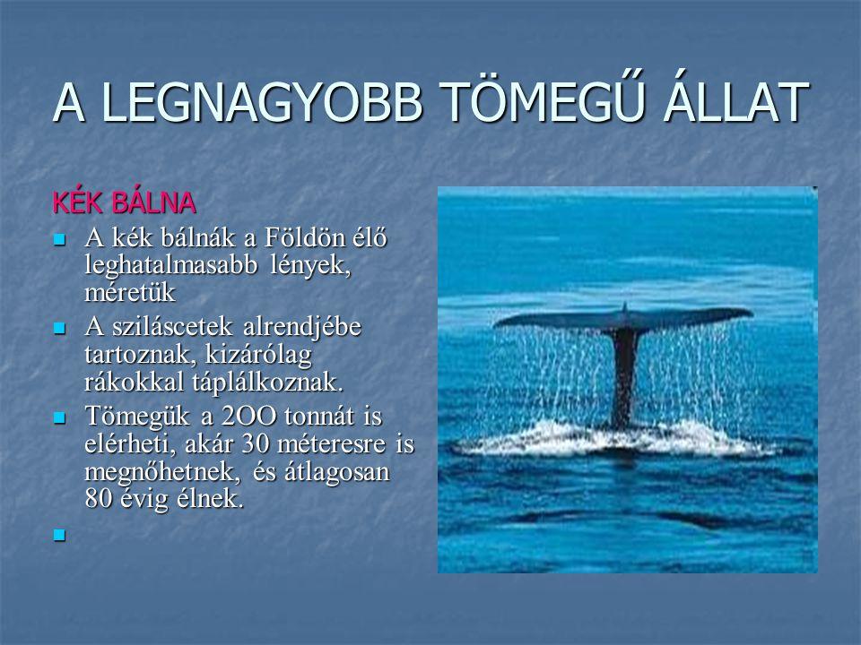 A LEGNAGYOBB TÖMEGŰ ÁLLAT KÉK BÁLNA A kék bálnák a Földön élő leghatalmasabb lények, méretük A kék bálnák a Földön élő leghatalmasabb lények, méretük