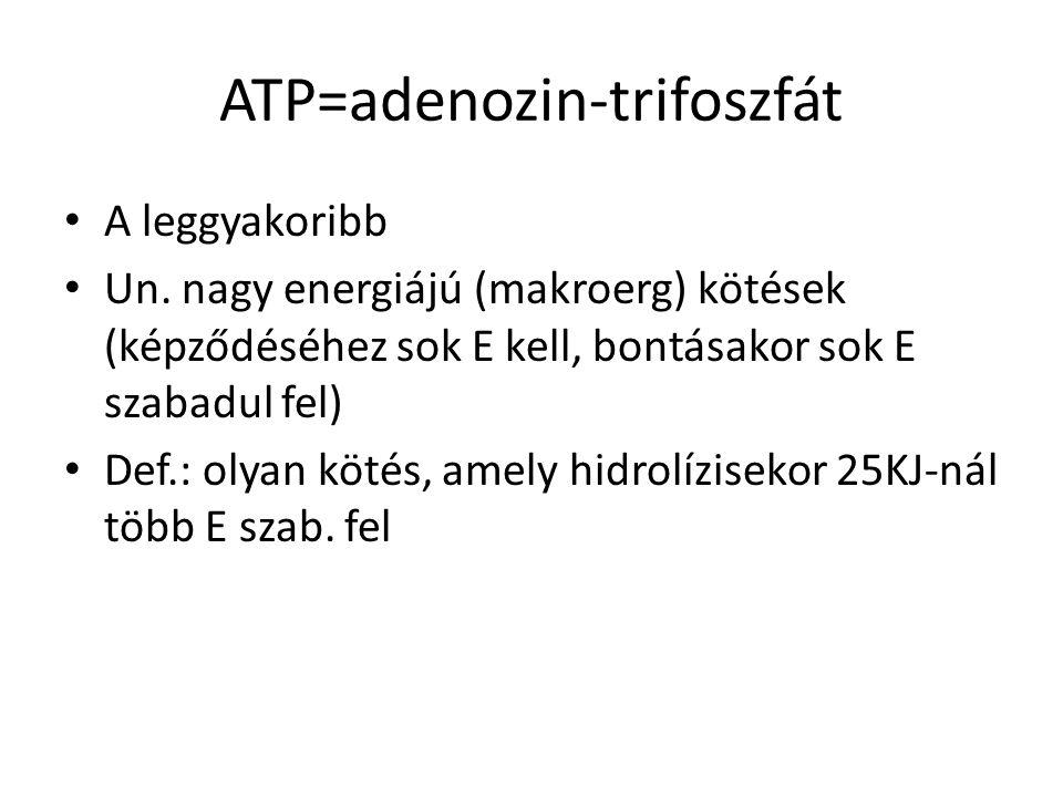 ATP=adenozin-trifoszfát A leggyakoribb Un. nagy energiájú (makroerg) kötések (képződéséhez sok E kell, bontásakor sok E szabadul fel) Def.: olyan köté
