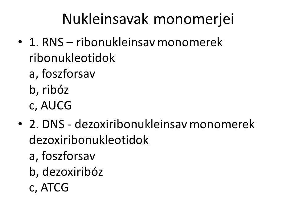 Nukleinsavak monomerjei 1. RNS – ribonukleinsav monomerek ribonukleotidok a, foszforsav b, ribóz c, AUCG 2. DNS - dezoxiribonukleinsav monomerek dezox