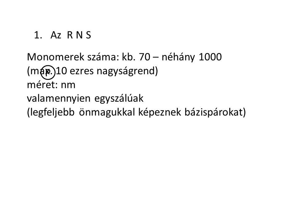 1. Az R N S Monomerek száma: kb. 70 – néhány 1000 (max. 10 ezres nagyságrend) méret: nm valamennyien egyszálúak (legfeljebb önmagukkal képeznek bázisp