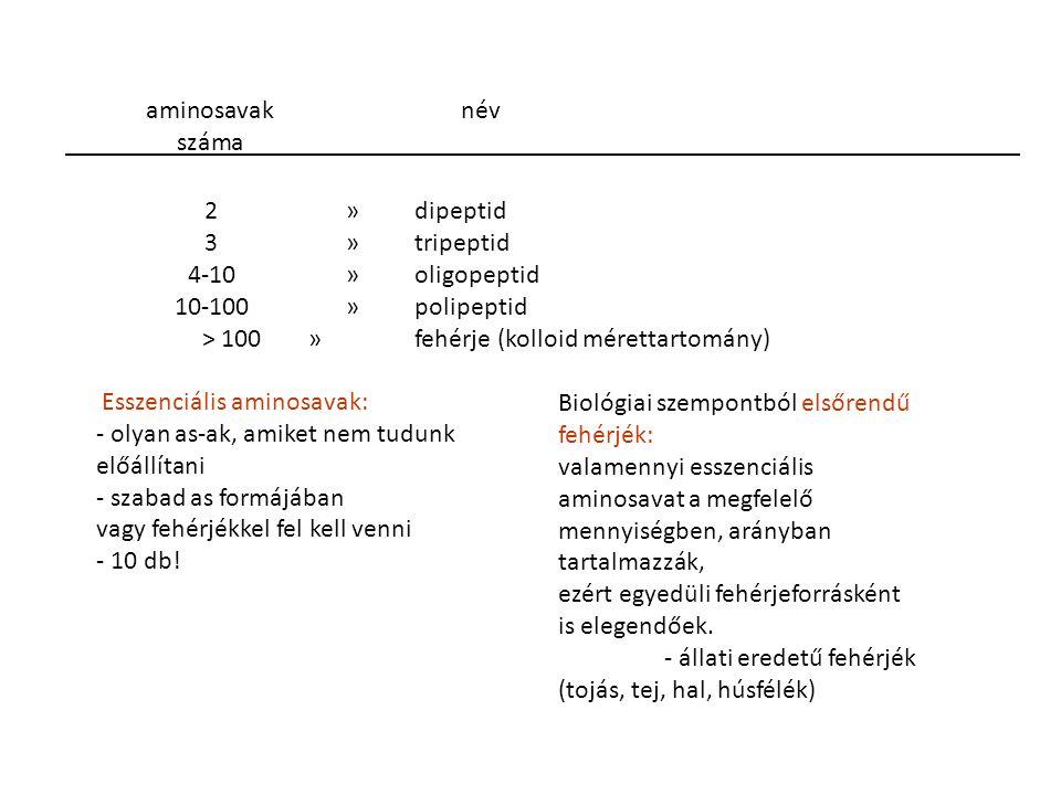 2» dipeptid 3 » tripeptid 4-10 » oligopeptid 10-100 » polipeptid > 100 » fehérje (kolloid mérettartomány) Esszenciális aminosavak: - olyan as-ak, amik