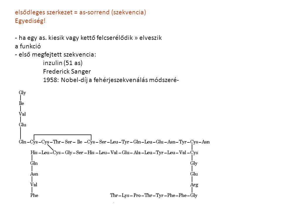 elsődleges szerkezet = as-sorrend (szekvencia) Egyediség! - ha egy as. kiesik vagy kettő felcserélődik » elveszik a funkció - első megfejtett szekvenc