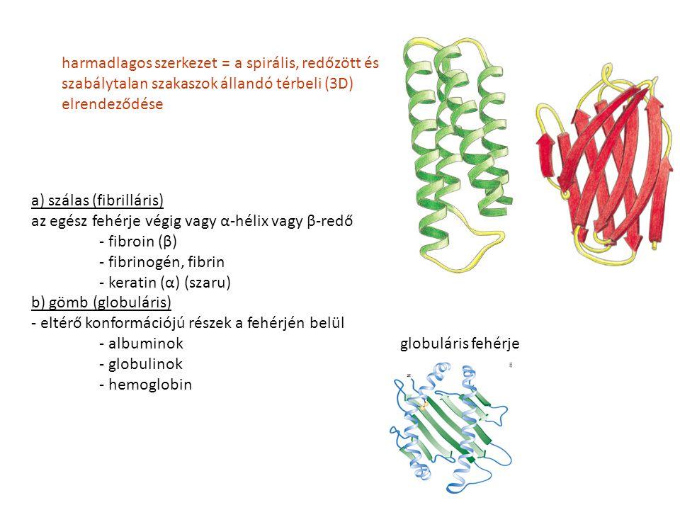 harmadlagos szerkezet = a spirális, redőzött és szabálytalan szakaszok állandó térbeli (3D) elrendeződése a) szálas (fibrilláris) az egész fehérje vég